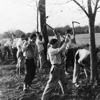 Travaux agricoles dans une colonie pénitentiaire