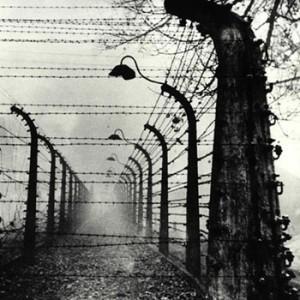 Barbelés du camp d'Auschwitz